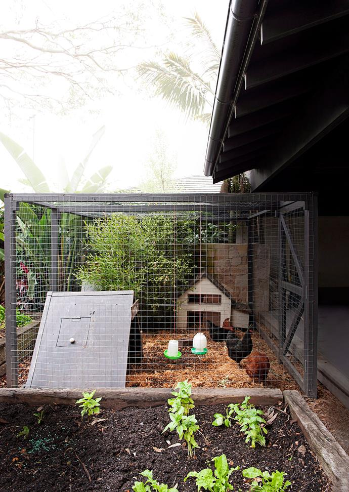 The main function of the chicken coop is to protect the hens from predators including foxes and neighbourhood dogs. *Photo: Tony Amos / bauersyndication.com.au*