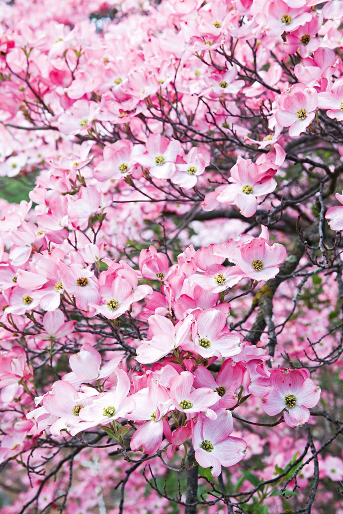 """In [early spring](https://www.homestolove.com.au/5-bulbs-to-plant-for-spring-4989