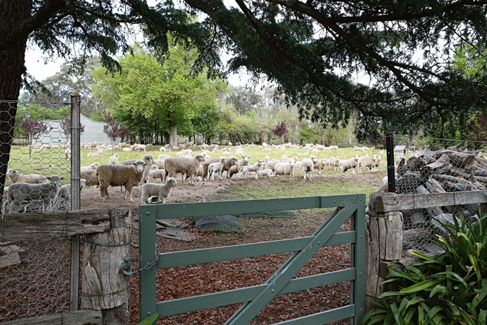 """Peter runs sheep and cattle on the 730-hectare property, and also has a fencing business; yet he still finds time to keep the garden vision alive. """"We don't have any plans for extending it,"""" he says. """"But we chip away at it over the years — it's an ongoing project."""""""