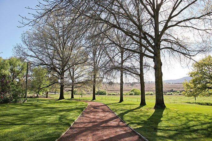 """An avenue of pin oaks were planted by Peter's parents in the 1950s. Ruth and Jo continued the tradition of [planting trees](https://www.homestolove.com.au/how-to-plant-a-tree-10147