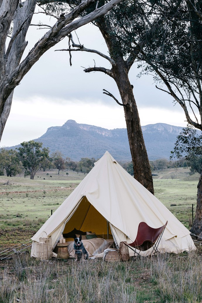 """Mate keeps watch outside a bell tent from [Homecamp](https://homecamp.com.au/ target=""""_blank"""" rel=""""nofollow""""). Similar tents are available to stay in at Warramba."""