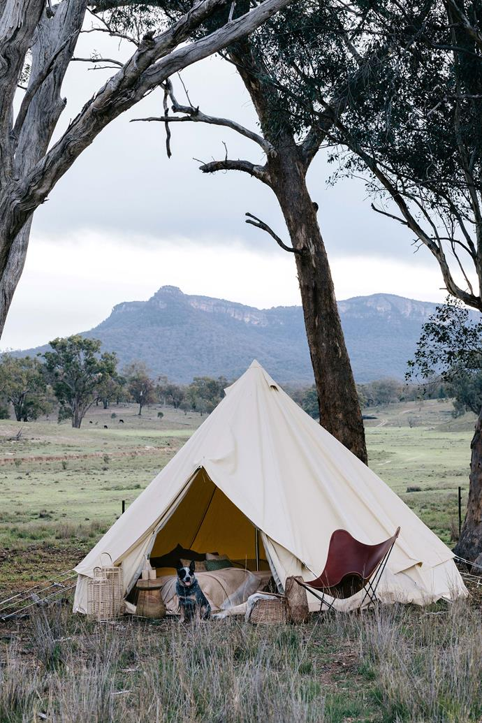 "Mate keeps watch outside a bell tent from [Homecamp](https://homecamp.com.au/|target=""_blank""
