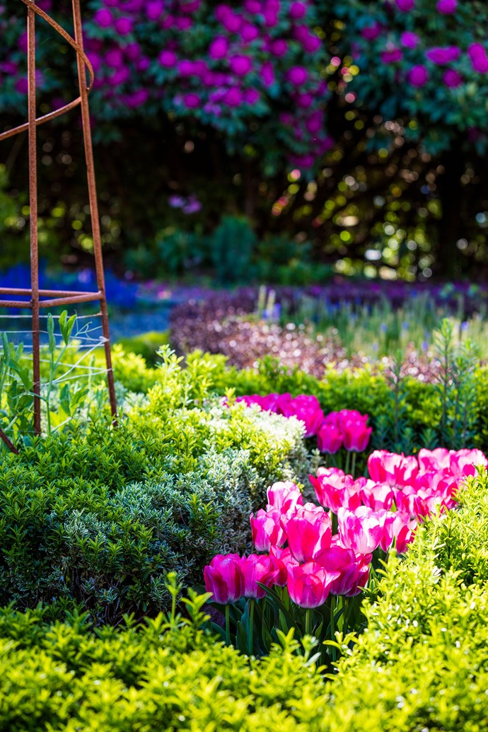 A cluster of tulips will never fail to add a pop of colour to your garden in spring. *Photo: Claire Takacs / bauersyndication.com.au*