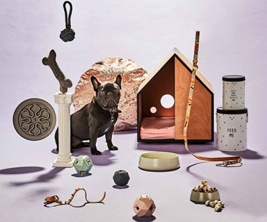 11 accessories and toys that your dog will love