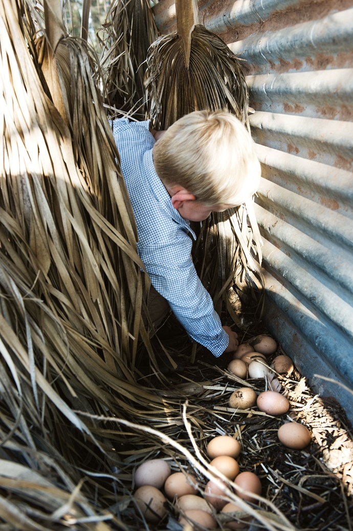 James collecting eggs laid by the family's ISA brown hens.