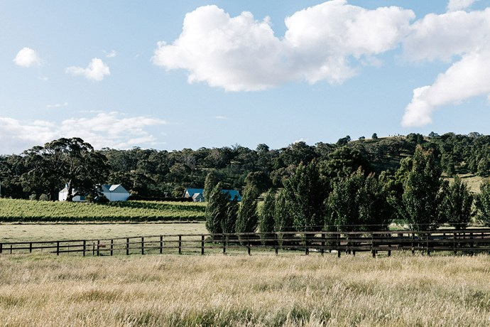 Meaghan has a view of Hanging Rock Winery's vineyard while riding.