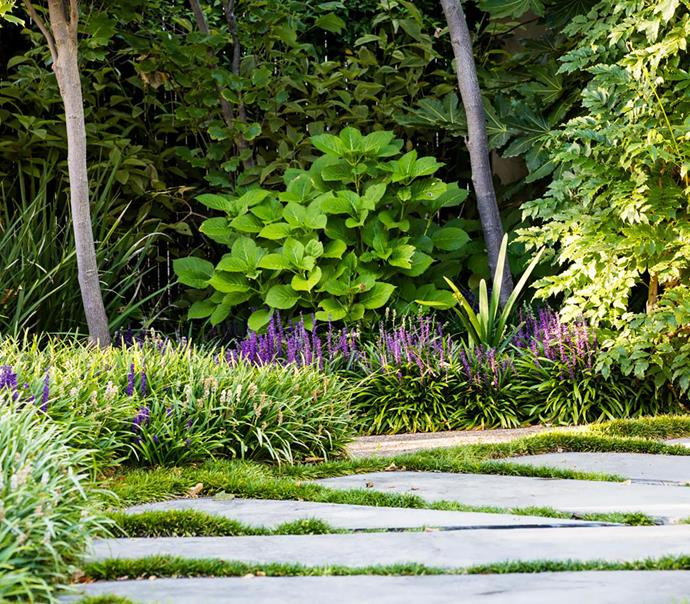 The pathway of limestone pavers edged in mini mondo grass leads through the urban 'meadow'.