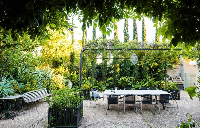Defining the outdoor dining space, the ornate steel pergola is a perfect climbing frame for Virginia creeper, which forms a green 'roof' over the table. Surrounding the table is a mix of richly textured plants, including candelabra aloe (Aloe aborescens), the spiky rosettes of which poke through a hedge of jade plant (Crassula ovata). Along the rear wall is the original row of pencil pines (Cupressus sempervirens 'Glauca'), behind a display of fragrant ornamental ginger (Hedychium flavum). Draping over the barbecue is Bougainvillea 'Tango'. At the base of each pergola corner is a steel planter filled with gardenias.