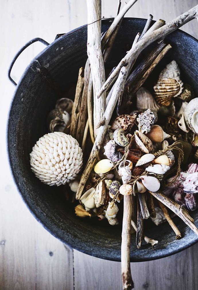 **Shells** Driftwood and seashells create an organic vignette.