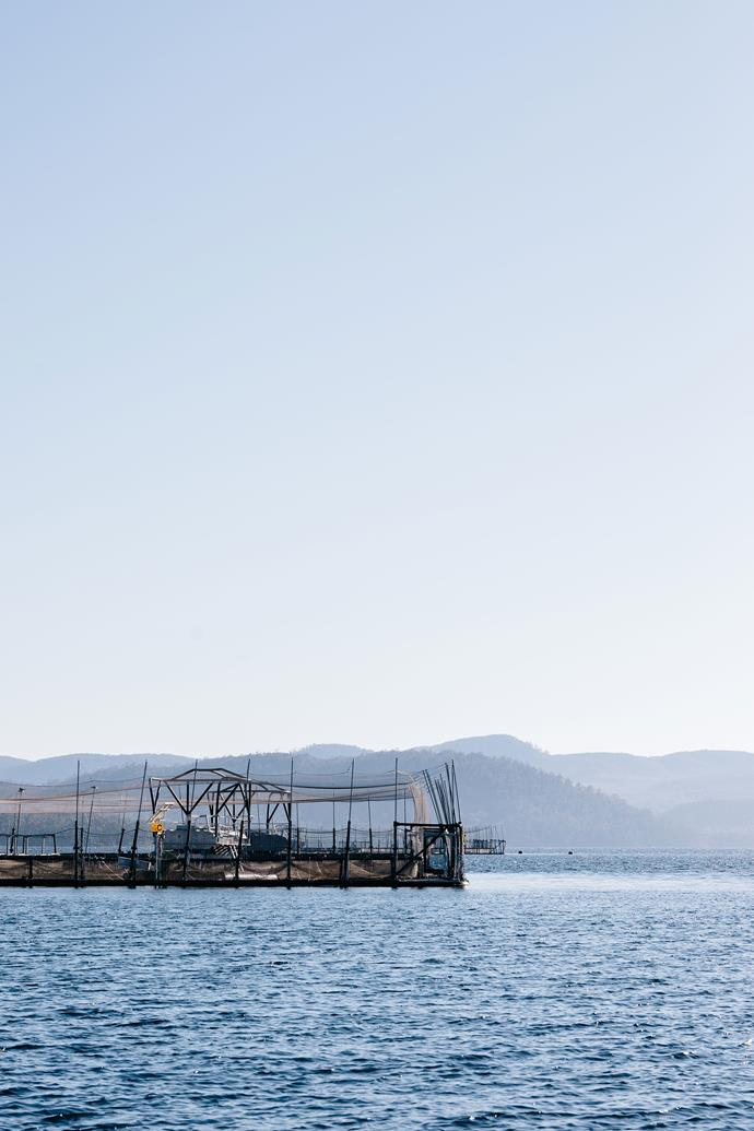 Salmon farming at Huon Aquaculture.