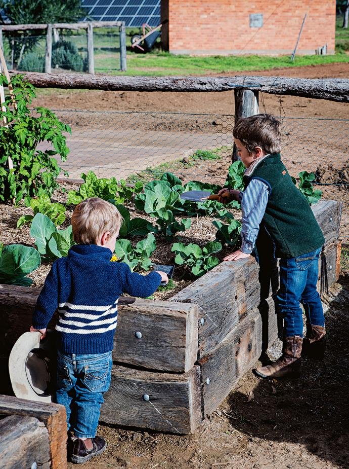 """Wally and Jack check on the [vegetable patch](https://www.homestolove.com.au/how-to-start-a-vegetable-patch-5108 target=""""_blank"""")."""