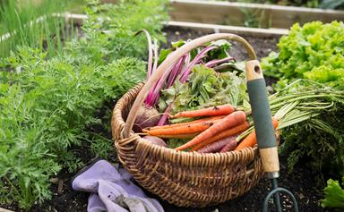 5 vegetables for autumn sowing in cool climates