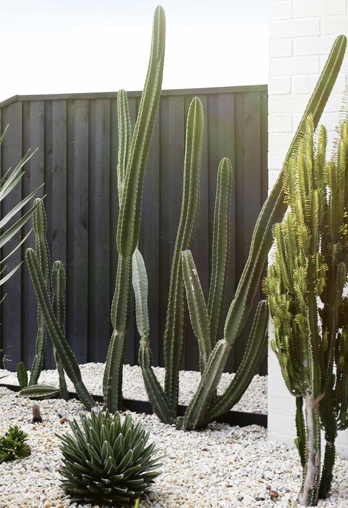 """<P>**PALM SPRINGS INSPIRED GARDEN**<P> <P>With a renewed interest in mid-century modern design has come a resurgence of [Palm Springs inspired gardens](https://www.homestolove.com.au/palm-springs-garden-16985 target=""""_blank""""). Creating garden beds that echo the angular architecture of the building is paramount. Just as a cottage needs a garden wild with flowers and rambling roses, so too does a mid-century modern home require sparse, structural plantings that are drought tolerant. That's because Palm Springs - where this style originates - is in the middle of the Sonoran Desert in south California. [Cacti and succulents](https://www.homestolove.com.au/outdoor-succulent-garden-13998 target=""""_blank""""), particularly mother-in-law's-tongue (Sansevieria trifasciata) are popular choices for this style of garden.<p> <p>*Photo: Anastasia Kariofyllidis / Story: Inside Out*<P>"""