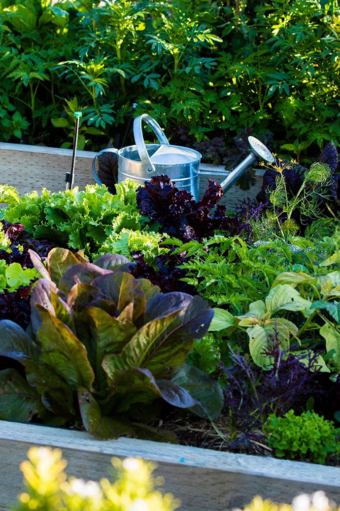When constructing your own raised garden bed, it's important to select the right material for your climate and purpose. *Photo: Claire Takacs / bauersyndication.com.au*