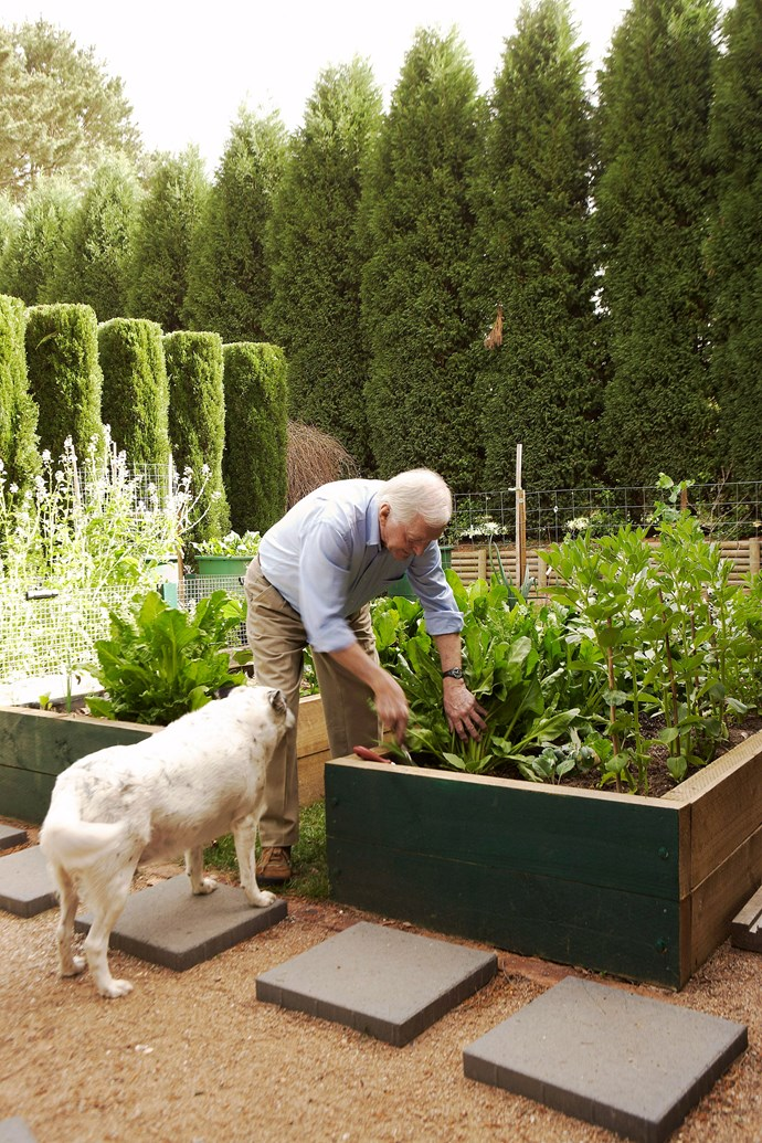 Raising the garden bed off the ground can save your knees. To save your back, keep a garden stool handy to sit down comfortably as you garden. *Photo: Michael Wee / bauersyndication.com.au*