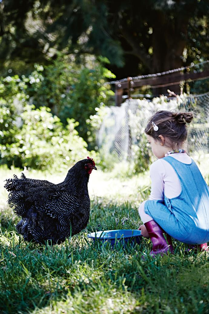 Four-year-old Sophie O'Connell offers some feed to one of the Plymouth Rock hens.