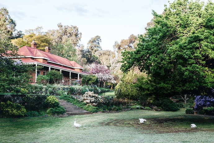 Built in 1896, Ford House sits on a two-hectare property in Bridgetown, WA. The house is dwarfed by an English oak tree on the right. The blossoming trees next to the house include a double-flowering cherry tree and a crabapple tree.