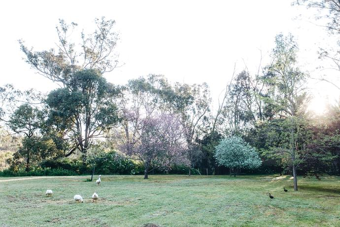 The tree towards the centre is an ornamental flowering plum. On the right is a silver pear tree (Pyrus salicifolia).