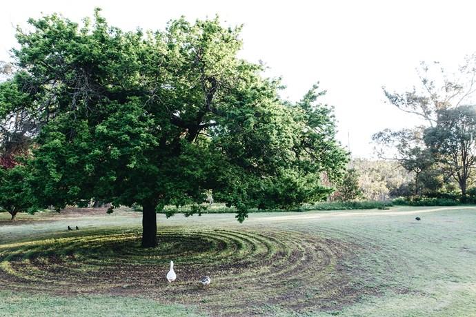 The grass beneath the English oak tree showcases Jenny's mowing skills.