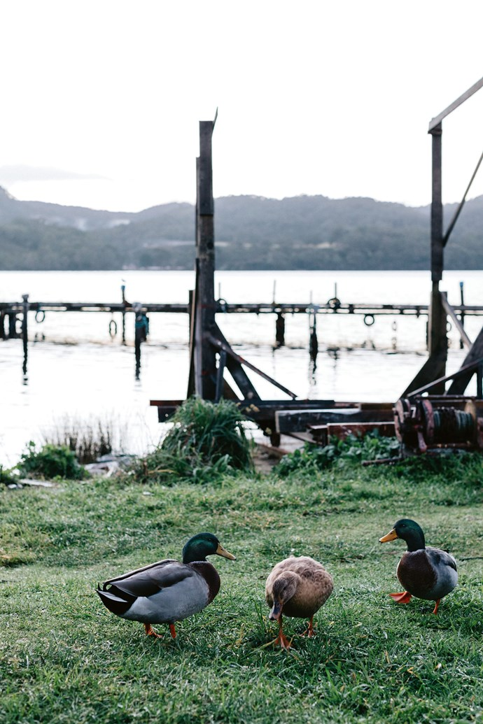 """Ducks graze on the grass that surrounds Lettes Bay. Beyond the house is the vast Tasmanian Wilderness World Heritage Area; a place where you can forget about the rest of the world and, for Sarah, a new adventure. """"I am so lucky,"""" she concludes."""