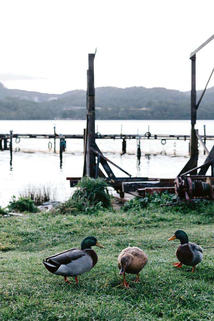 "Ducks graze on the grass that surrounds Lettes Bay. Beyond the house is the vast Tasmanian Wilderness World Heritage Area; a place where you can forget about the rest of the world and, for Sarah, a new adventure. ""I am so lucky,"" she concludes."