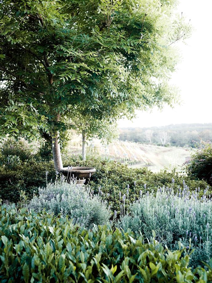 Looking out from the garden towards the tree nursery.