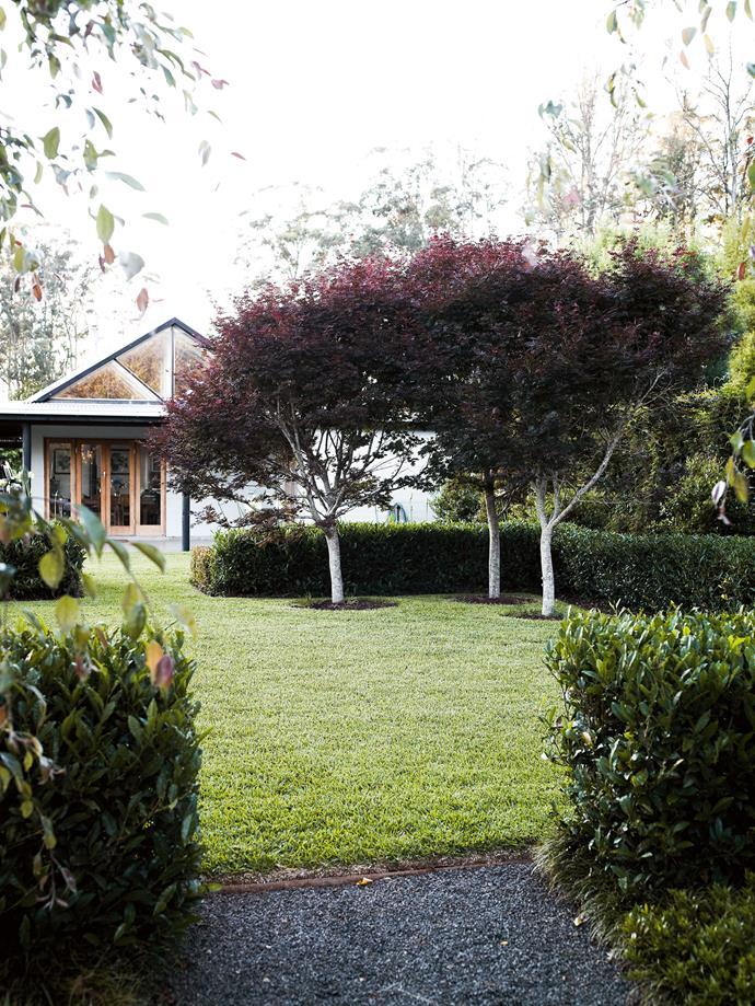 The courtyard, featuring Japanese maples (Acer palmatum 'Trompenburg').