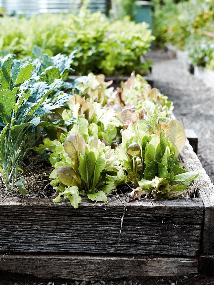 The organic vegetable plot.