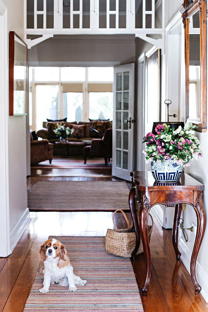 """Cavalier King Charles, Lottie, sits on a Dash & Albert 'Brindle Spice Stripe' rug in the home's [entrance hallway](https://www.homestolove.com.au/entrance-and-hallway-ideas-to-inspire-5111