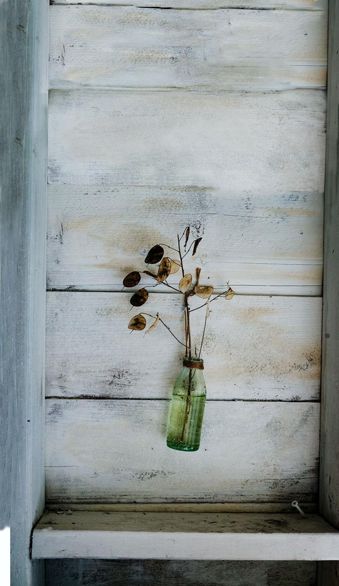 A plant cut-off hanging from the studio wall. Zoe often uses plants and produce from Reg's garden as inspiration for her paintings.