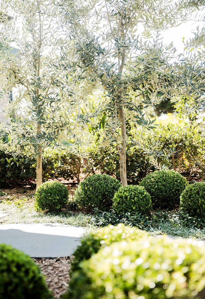 **Garden** Olives (*Olea europaea*) are planted in a row along the boundary.
