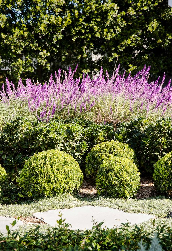 **Colour rush** Soft purple hues add a pop of vibrant colour to the garden.