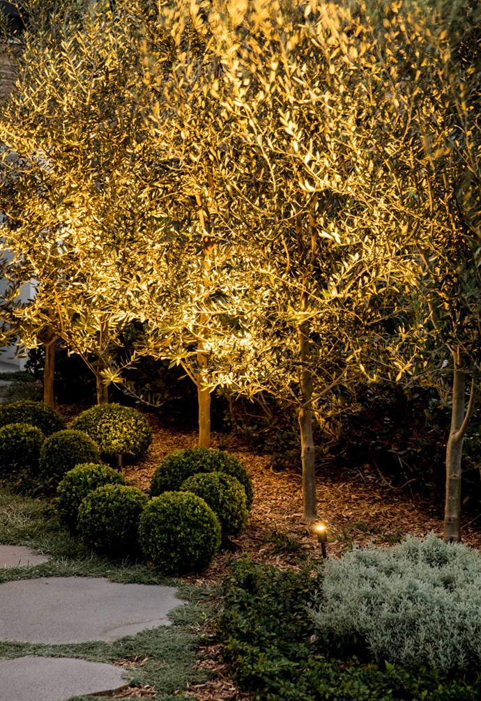 **Front garden** Come evening, Twiggy spike lights by Nocturnal Lighting show the olive orchard in its best light.