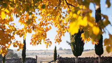 10 trees to plant for autumn leaves in Australia
