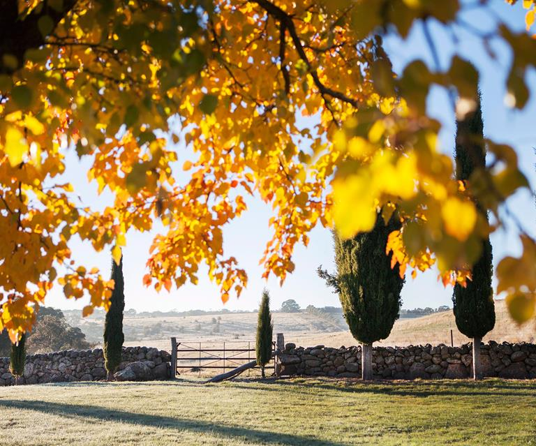 10 Trees To Plant For Autumn Leaves In Australia Homes To Love
