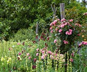 A flourishing rose garden in the Southern Highlands town of Berrima
