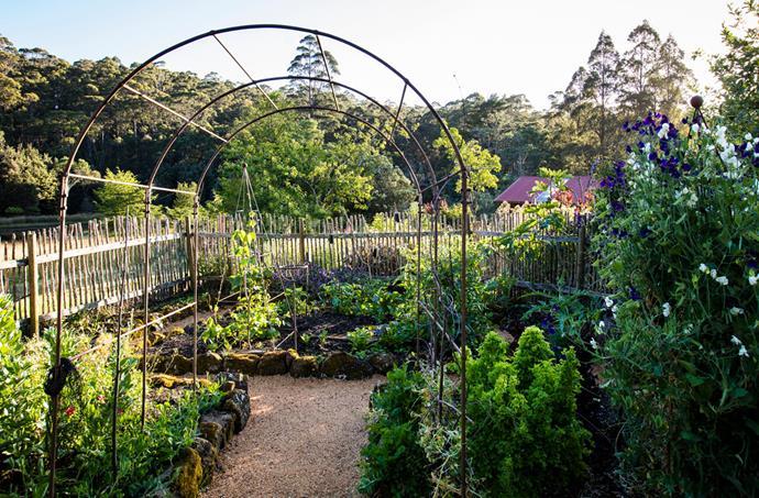 Sally's vegetable garden.