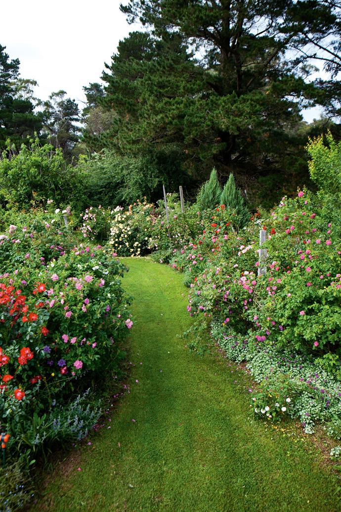The main feature is a generous rose walk, a three-metre wide grassy path planted thickly on either side with roses and apple trees, and underplanted with perennials. The layout is governed by Clive's passion for different rose types and colours.