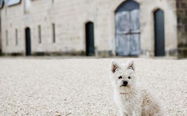 Funny dog stories from around Australia