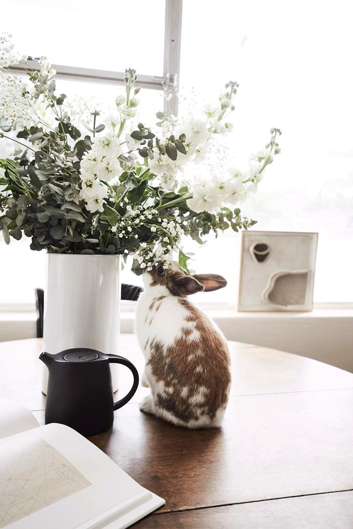 "Nyima, an English Spot rabbit, belongs to art consultant and owner of [Jerico Contemporary](http://www.jericocontemporary.com/|target=""_blank""