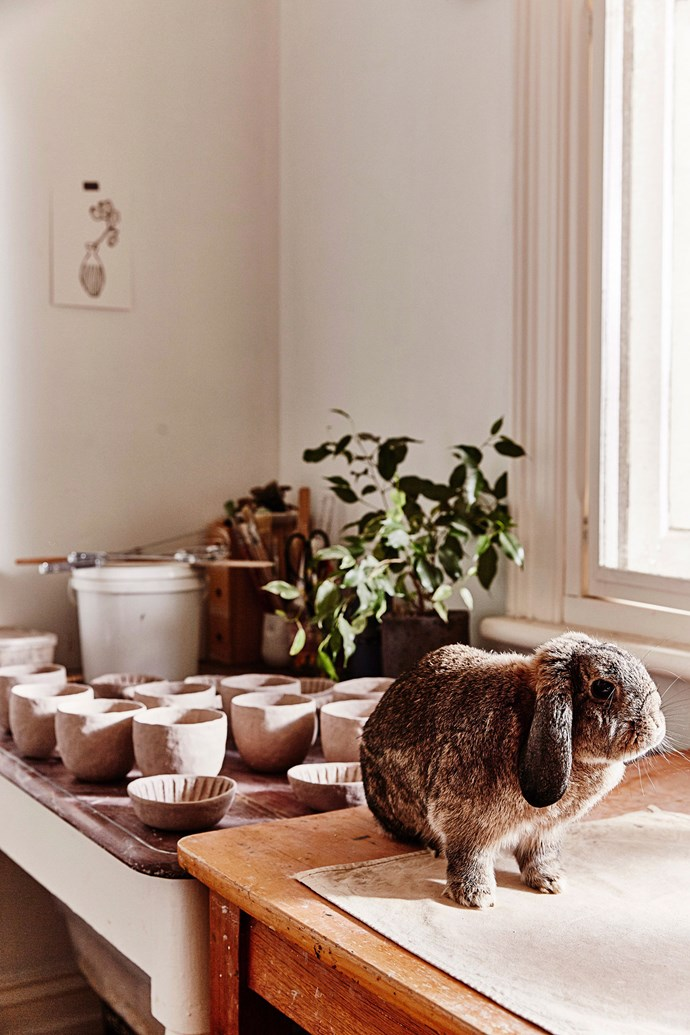 "Tilvie, a Mini Lop rabbit, sits atop a workbench in the studio of potter [Katia Carletti](https://www.homestolove.com.au/real-pets-meet-tilvie-the-mini-lop-rabbit-5545|target=""_blank""