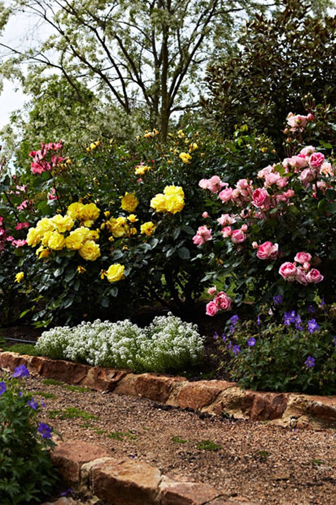 Pink, white and red roses are always classic choices, but unusual varieties in vibrant colours can add a modern edge to your front or back garden. *Photo: Armelle Habib / bauersyndication.com.au*