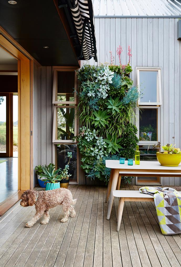 A natural, weathered timber is the perfect finish for this coast exterior. *Photo:* Armelle Habib