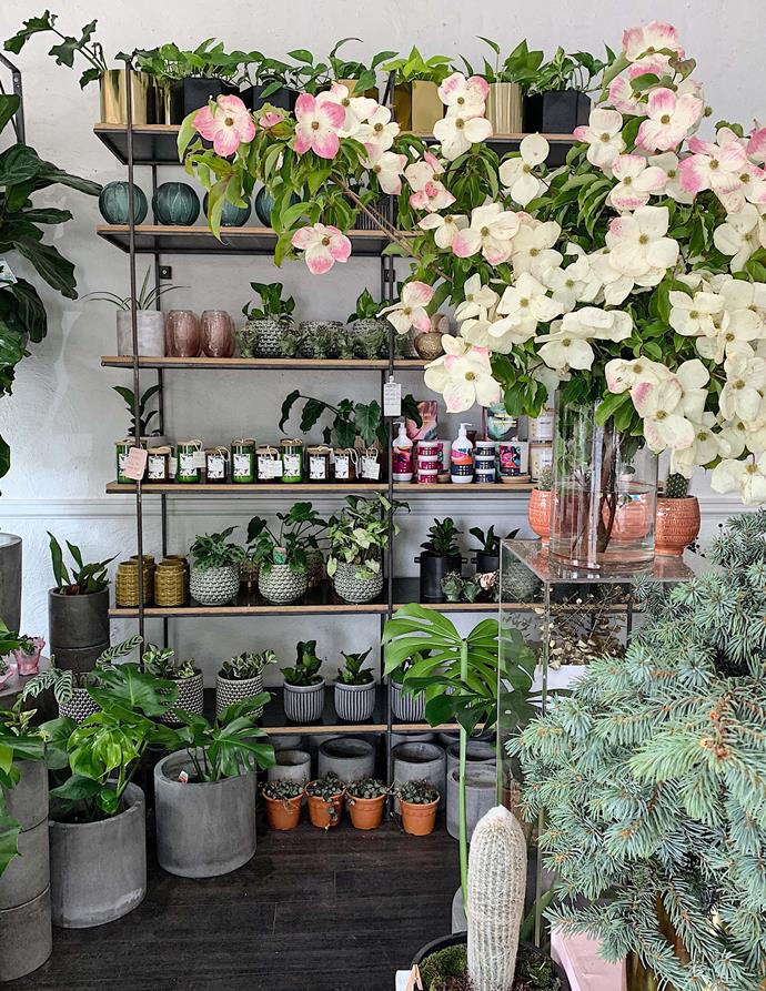 Pots and posies at Floral Army, East Fremantle