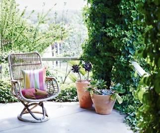 Wicker chair on vine covered verandah