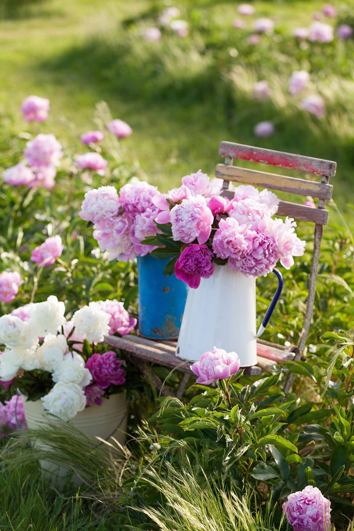 Peonies are one of the most sought-after flowers, however, they are only in season for a short period of time in Australia.*Photo: Simon Griffiths / bauersyndication.com.au*