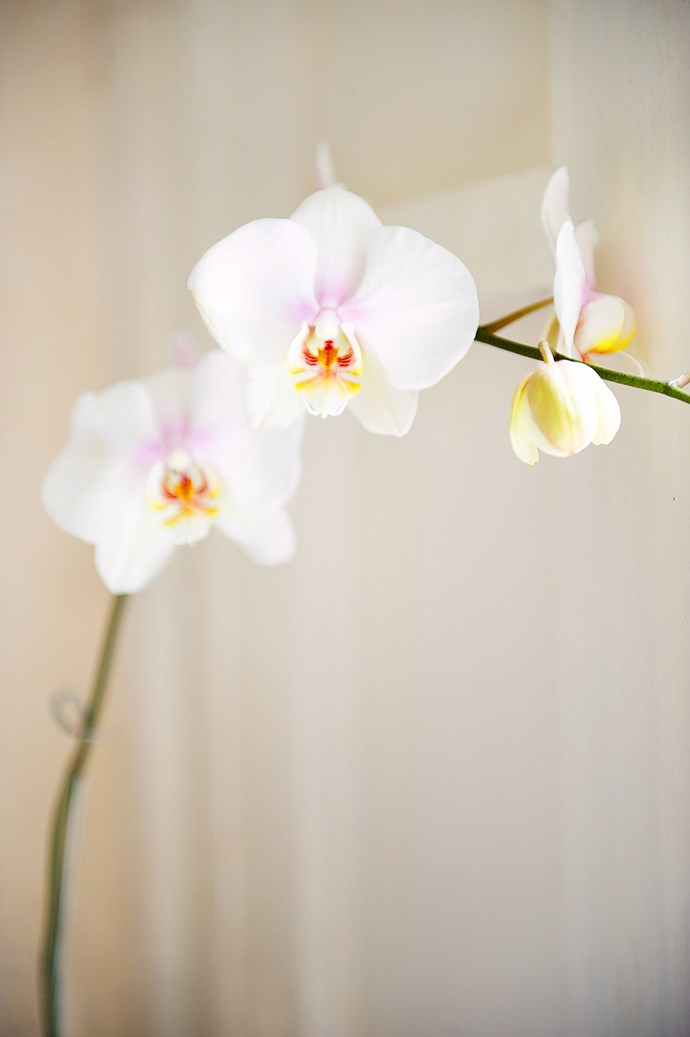 Sub-tropical plants, such as orchids, are better grown indoors. *Photo: Simon Griffiths / bauersyndication.com.au*