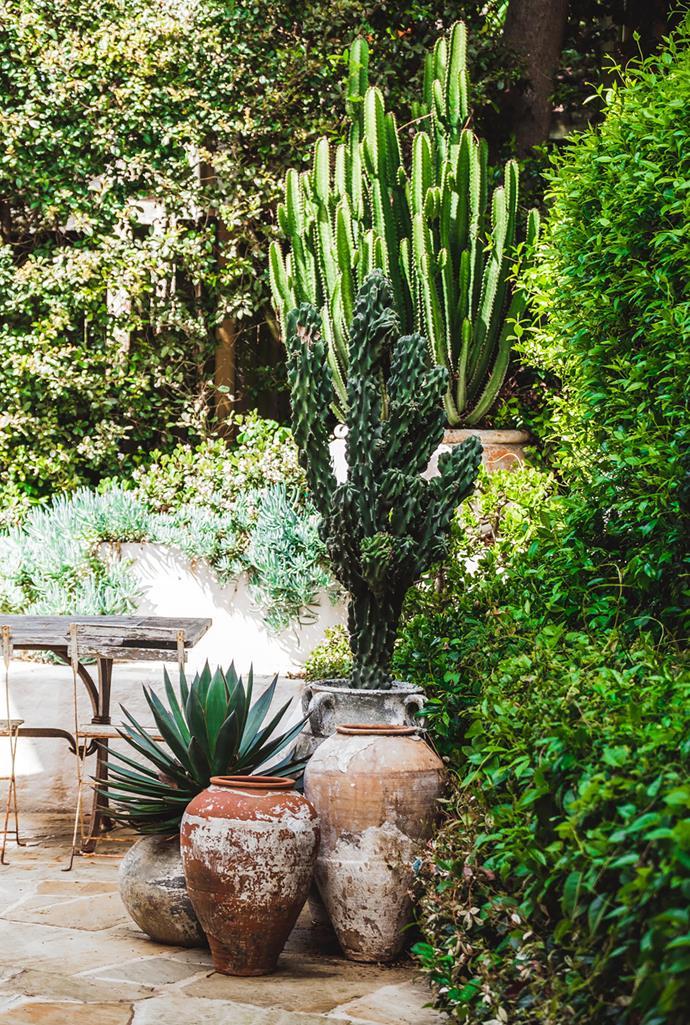 Groupings of huge terracotta pots planted with architectural succulents such as agaves and cacti create drama and add variety to the space