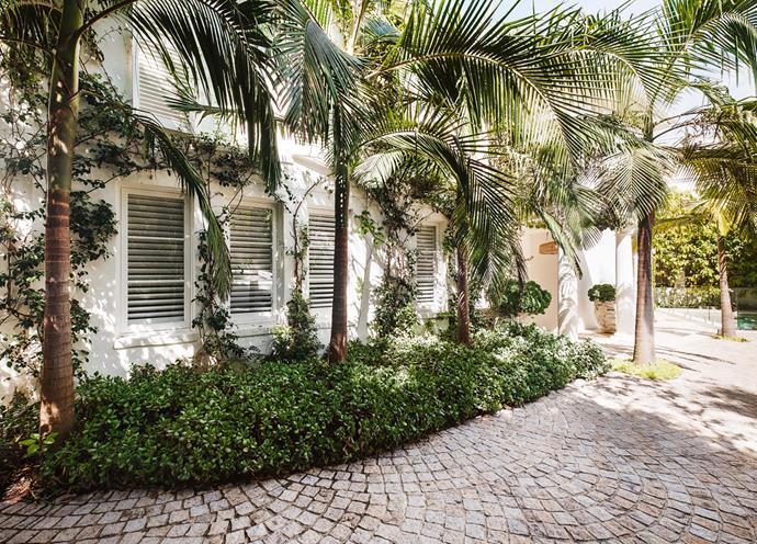 *Crassula arborescens* 'Max Cook' is planted under the palms.