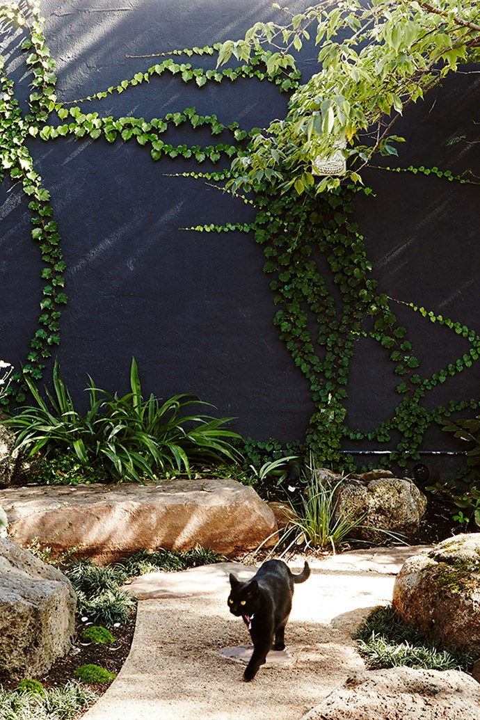 Cats would really rather be out exploring the garden then confined to an enclosed carrier. *Photo: Annette O'Brien / bauersyndication.com.au*